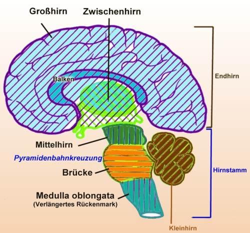 Psychologischer & biologischer Hintergrund Entscheidungsfindung ...